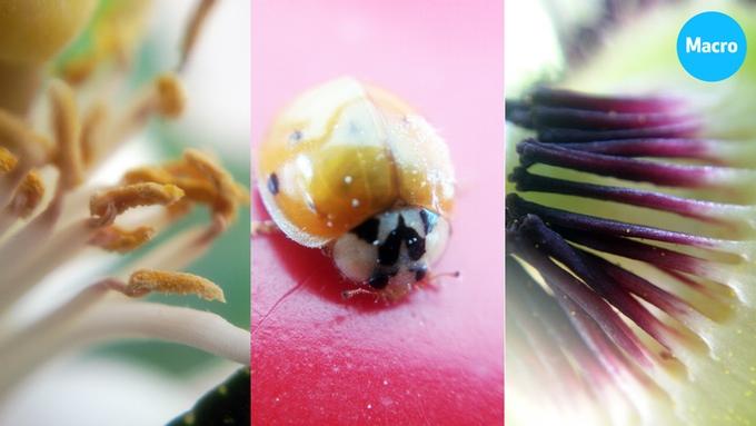 Citronblomst / mariehøne / passionsfrugtblomst fotograferet med Blips MACRO objektiv