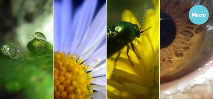 Vanddråbe på blad / Gåseurt / Bille på blomst / Menneskeøje fotograferet med Blips MACRO objektiv